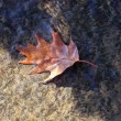 Autumn dry leaf in water stream - Stock Photo