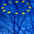 European Union flag with the silhouette of a shadow tree and bra — Stock Photo #22755925