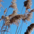 Weed grass against the blue sky — Vídeo Stock