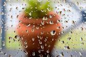Regen druppels op vensterglas op de achtergrond bloempot — Stockfoto