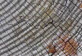 Cracked and gray wooden background — Stockfoto