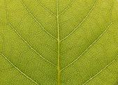 Superfície da folha verde na luz do sol — Fotografia Stock