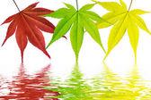 Tricolor seasons — Stock Photo