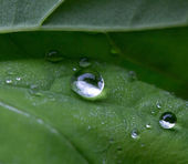 Drops of rain on green leaf — Stock Photo