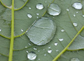 Drops of rain on a green leaf — Stock Photo