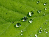 Drops of rain on a green leaf in the sunlight — Stock Photo