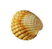 Scallops shell on white background — Stock Photo