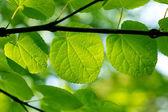 Foglie verdi fresche in una foresta — Foto Stock