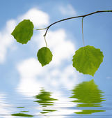 Green leaves on branch against the sky over water — Stock Photo
