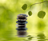 Balancing stones in water and green branch — Stockfoto