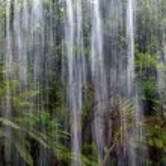 Tropical rain in the jungle — Stock Photo
