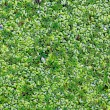 Stock Photo: Marsh duckweed in forest