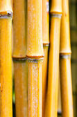 Bamboo stems in a forest — Stock Photo