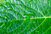 Drops of rain on the green leaf — Stock Photo