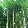 Bamboo trunks a the forest — Stock Video