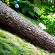 Fallen tree in the garden — Stock Photo
