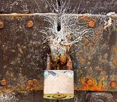 Vieja cerradura de la puerta en la web — Foto de Stock