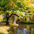 Autumn park in the city  Hanover  — Stock Photo