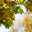 Reflection of autumn leaves in water — Stock Photo