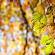 Stock Video: Tree branch in autumn forest