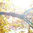 Stock Video: Sunbeam in autumn forest