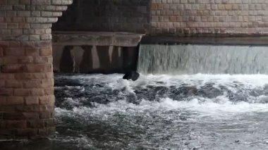 川に架かる橋 — ストックビデオ