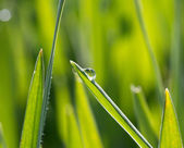 A dewdrop on the green grass in sunlight — Stock Photo