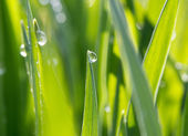 dewdrops on green grass in sunshine — Stock Photo