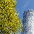 Green tree branches against skyscraper and blue sky — Stock Photo #45692527