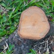Top view of a Cut Tree Stump — Stock Photo