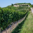Vineyard in Rhineland Palatinate — Stock Photo