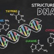 Chemical structure of DNA on a blackboard — Stock Photo #16668511