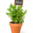 Mint in a clay pot with a wooden label — Stock Photo