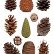 Cones collection — Stock Photo #14013120