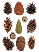 Cones collection — Stock Photo