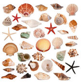 Shells collection — Stock Photo