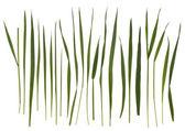 Brins d'herbe isolés sur blanc — Photo