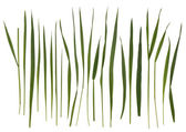 Grass blades isolated on white — Stock Photo