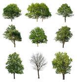 Bomen geïsoleerd op wit — Stockfoto