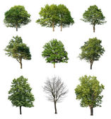 Trees isolated on white — Stockfoto