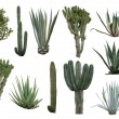 Cactus collection isolated on white — Stock Photo