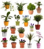Flores e plantas em vasos, isolados no fundo branco — Foto Stock