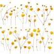 Pressed yellow wildflowers isolated on white — Stock Photo #22880692