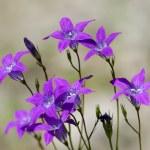 Purple mountain — Stock Photo