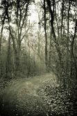 таинственный лес путь — Стоковое фото