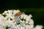 Beetle-shell on white flower — Stock Photo