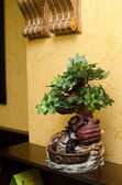 Planta verde en el arreglo — Foto de Stock