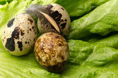 Quail egg and fresh salad — Stock Photo