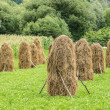 Stock Photo: Grren field with haystacks
