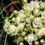 Wedding arrangement — Stock Photo #29804617